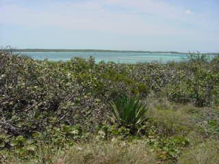 Whale Point North Eleuthera beachfront lot sales